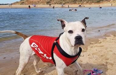 Hero dog saves drowning boy