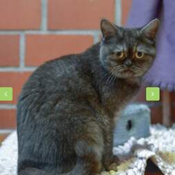 Cat with grumpy face passed over at shelter