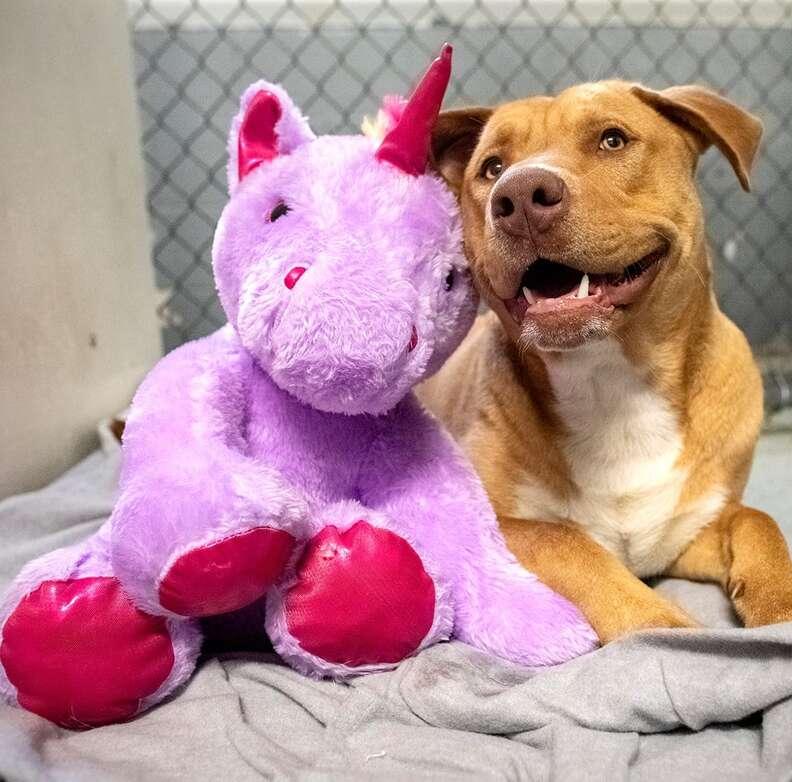 Sisu the dog steals toy
