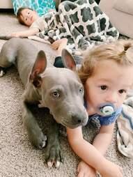 dog and babies