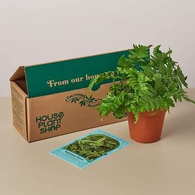 Pet Friendly House Plant Subscription Box