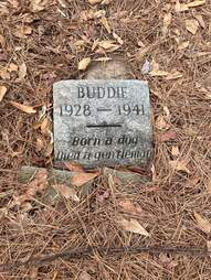 Buddie the dog's grave in Kiroli Park