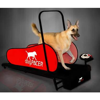 DogPACER Full Size Dog Treadmill