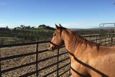 airbnb horse ranch la