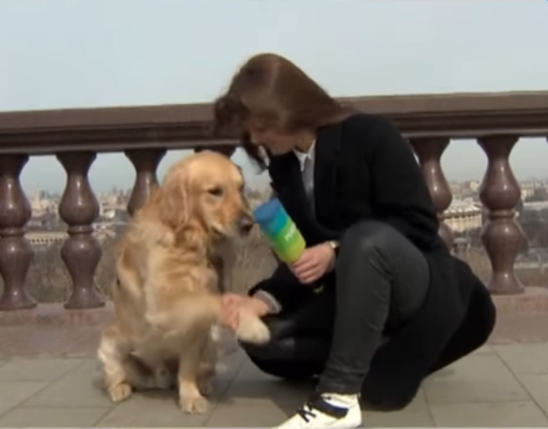 Dog Steals Reporter's Microphone During Live News Broadcast - The Dodo