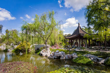 the Chinese garden at The Huntington, California
