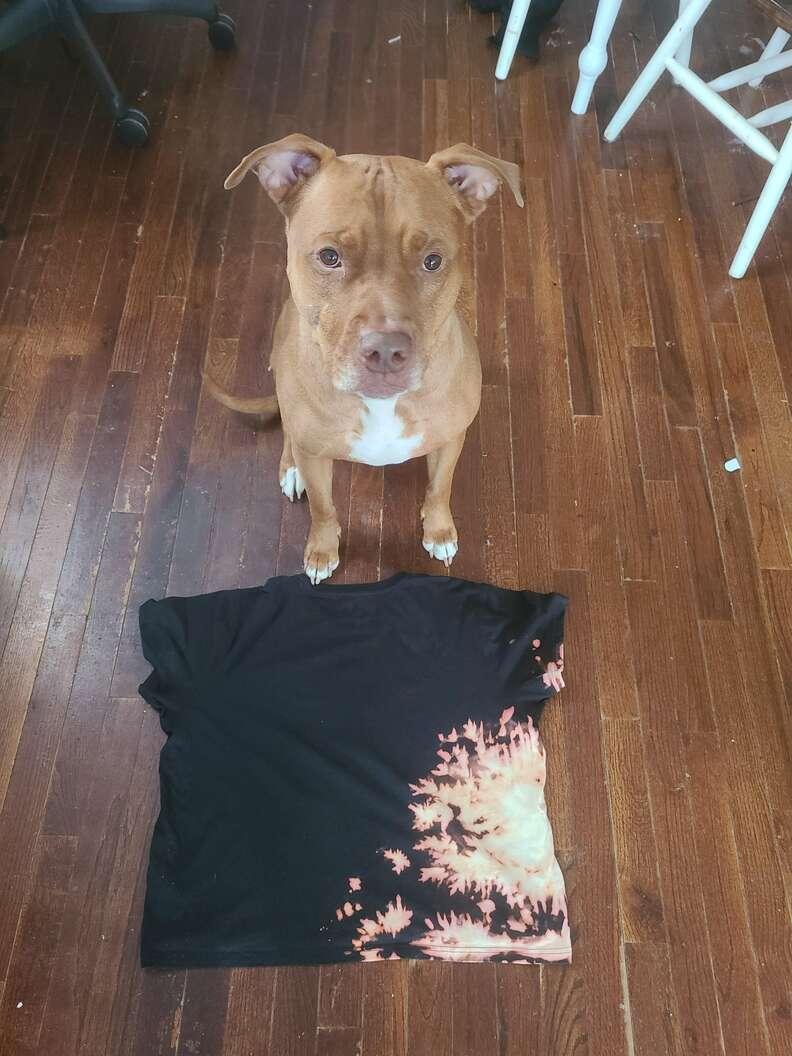 Dog creates t-shirt design with bleach