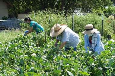 Gardeners in Community Development