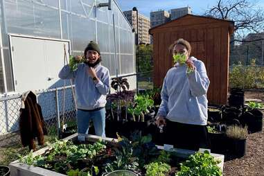 The Horticultural Society of New York