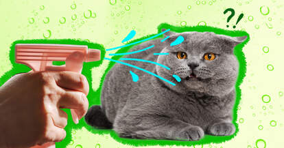 spraying cat with water