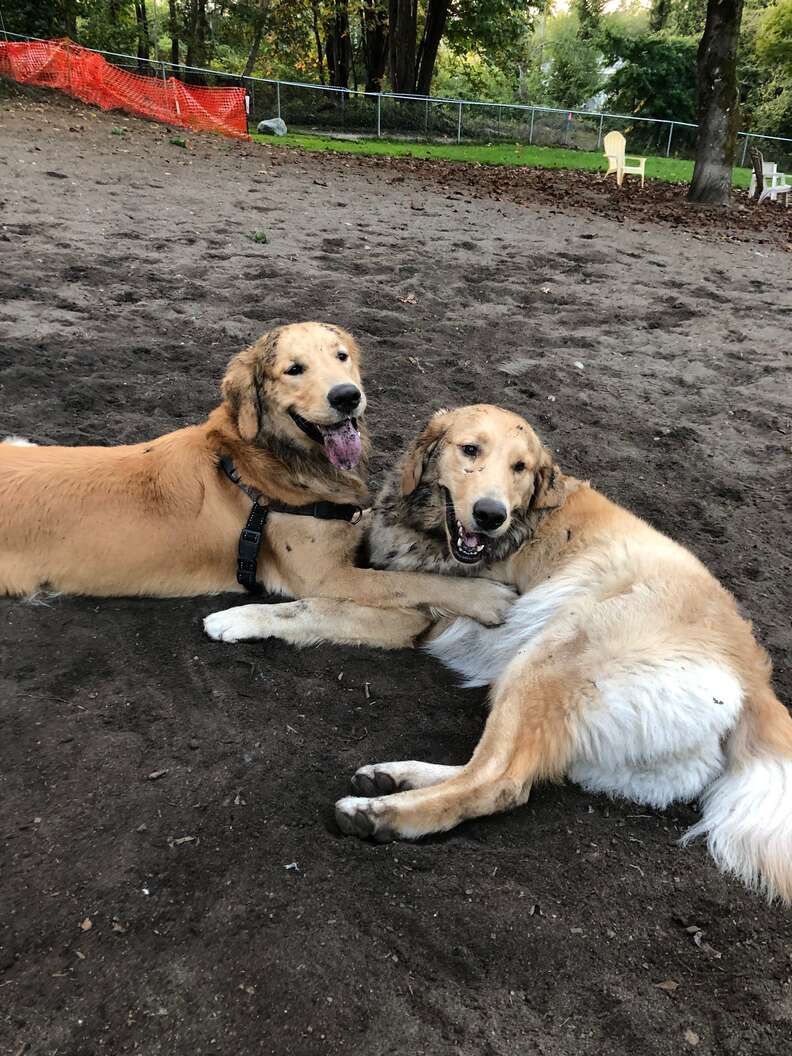 Dog reunites with brother at the park