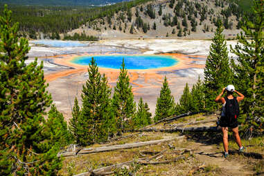 the grand prismatic spring in yellowstone
