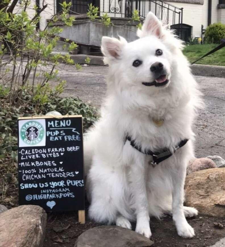 Dogs visit a dog cafe