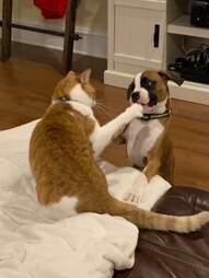 Cat taunts his dog sister