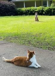 Cat and dog frenemies