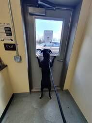 Shelter dog waits for family to return