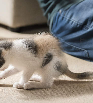 New Cat-Parent Essentials For Anyone Participating In Adopt A Shelter Pet Day