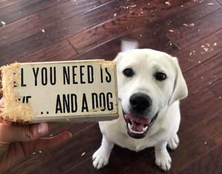 dog and funny sign