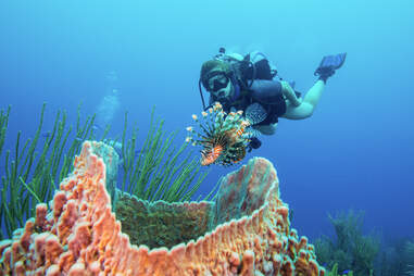 diver in coral reef in belize