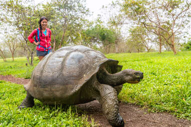 woman looking at turtle
