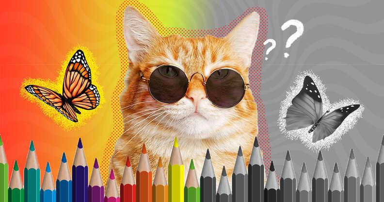 cat with sunglasses
