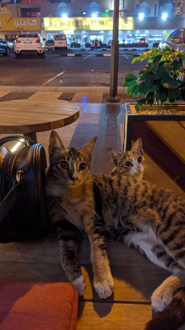 Stray cats at cafe follow guy home