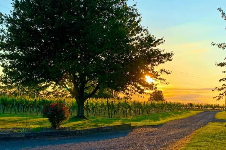 Rushland Ridge Vineyard & Winery