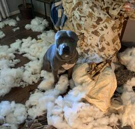 Dog destroys woman's couch