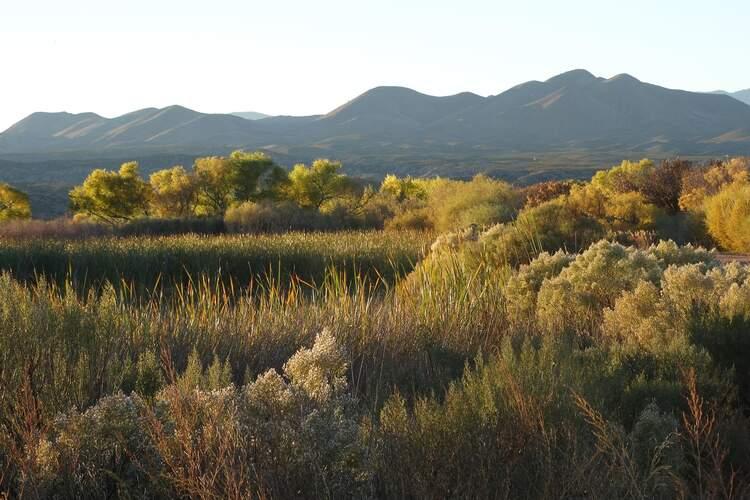 Bosque Del Apache National Wildlife