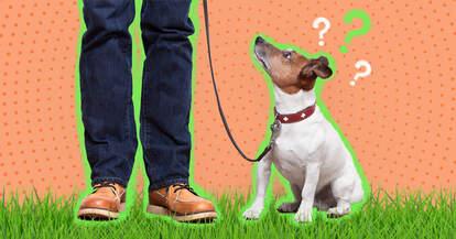 Dog walker and dog