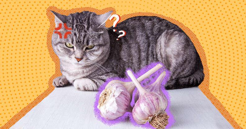 Cat and garlic