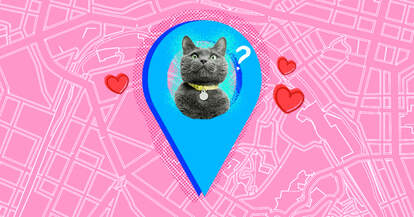 Cat Tracker and GPS