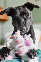 dog loves toy unicorns
