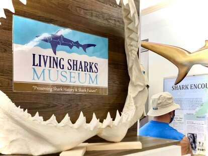 Living Sharks Museum