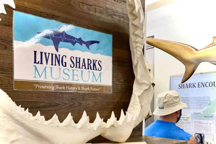 Living Sharks Museum & Research Center