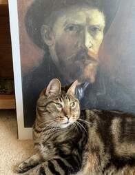 special needs cat