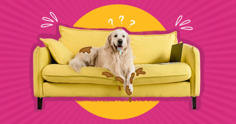Dirty dog on furniture