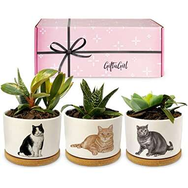 Succulent Cat Planters