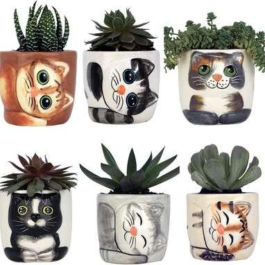 6 Mini Succulent Kitty Pots