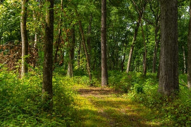 White Pines Forest State Park