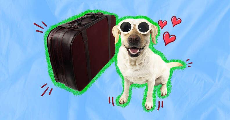 Dog friendly hotel chains