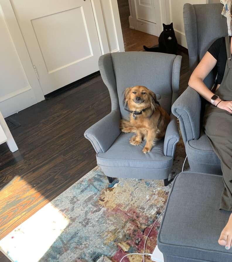 Dog gets a tiny armchair