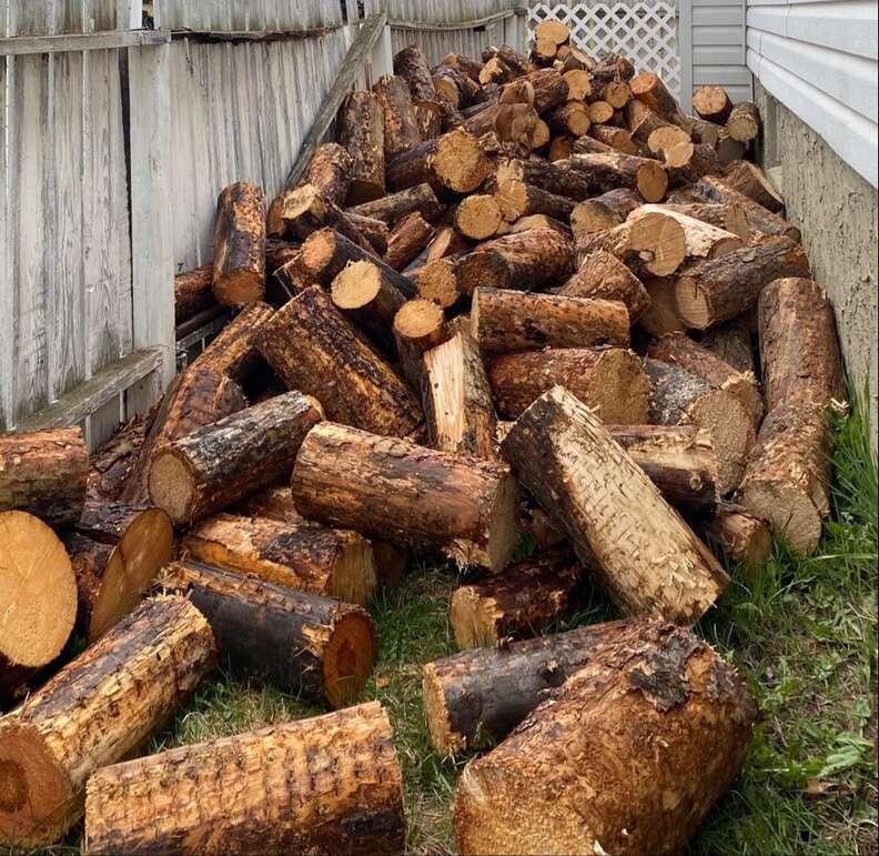 dog in log pile
