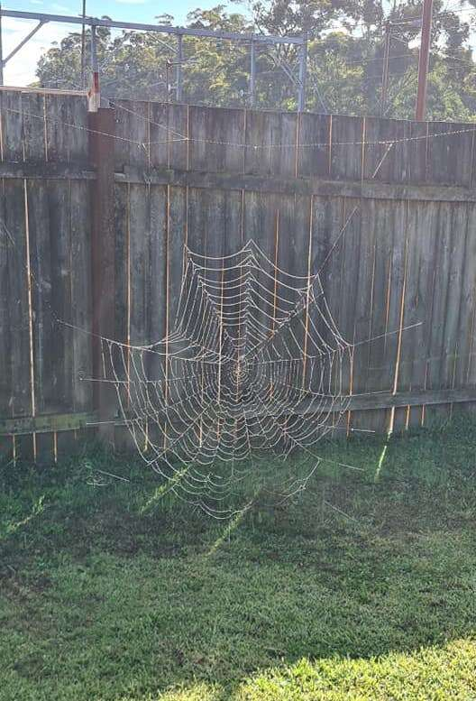 Woman finds giant spider web in backyard