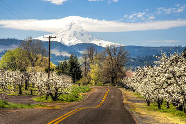 The orchards of Hood River