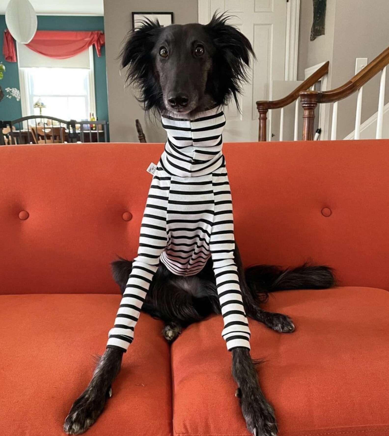 Long-Necked Dog Becomes Instagram Model for Turtlenecks