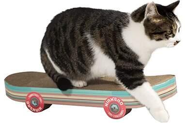 Funny cat scratcher