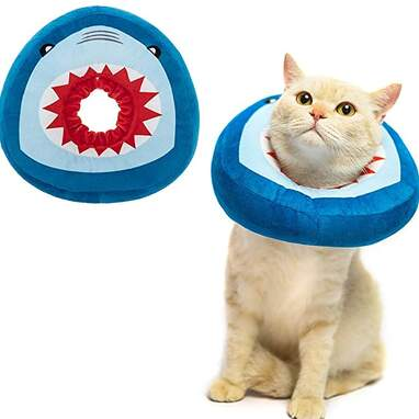 Funny cat recovery collar
