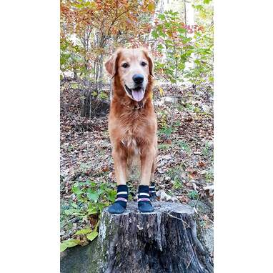 All Weather Neoprene Paw Protector