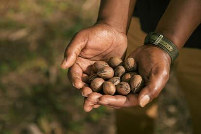 black pecan farmer holding pecans